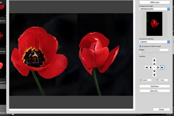Two images of tulips are merged together in Canon's Digital Photo Professional imaging software.