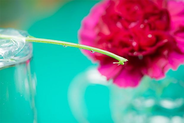 A flower stem balanced on a glass.