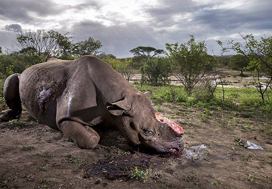 Brent Stirton Wins Wildlife Photographer of the Year Award 2017