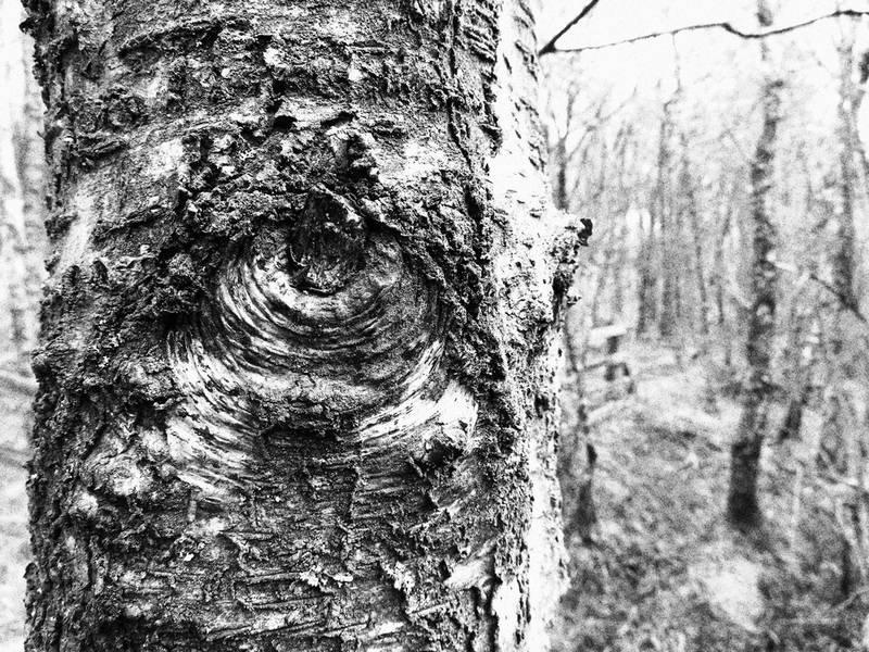 Laissez-vous aller au milieu des arbres