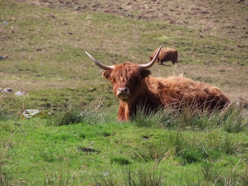 Écosse typique