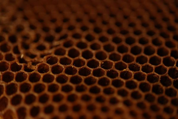 A close-up of a honeycomb.