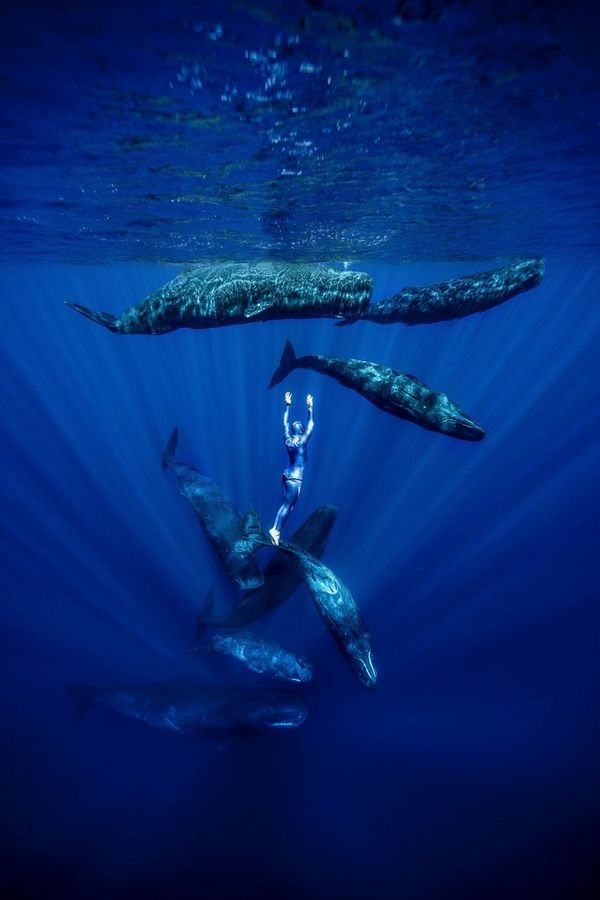 Freediver Guillaume Néry is suspended in the water surrounded by eight sperm whales, illuminated with rays of light.