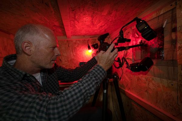 Inside his hide, lit by a red light, Ingo Arndt adjusts his Canon camera with Canon Macro Twin Lite MT-24EX flash attached.