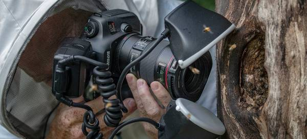 Ingo Arndt, in protective clothing, uses a Canon EOS 5DS R and Canon Macro Twin Lite MT-24EX flash to photograph honeybees at the entrance to their nest.