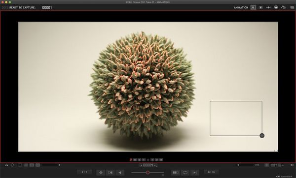 A screenshot of the Dragonframe stop motion animation software demonstrating focus peaking.