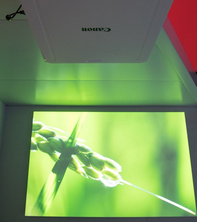 projection of plant