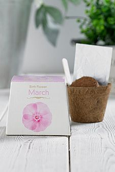 Birth Flowers August Birthday Gift Gardener Grow Your Own Kit