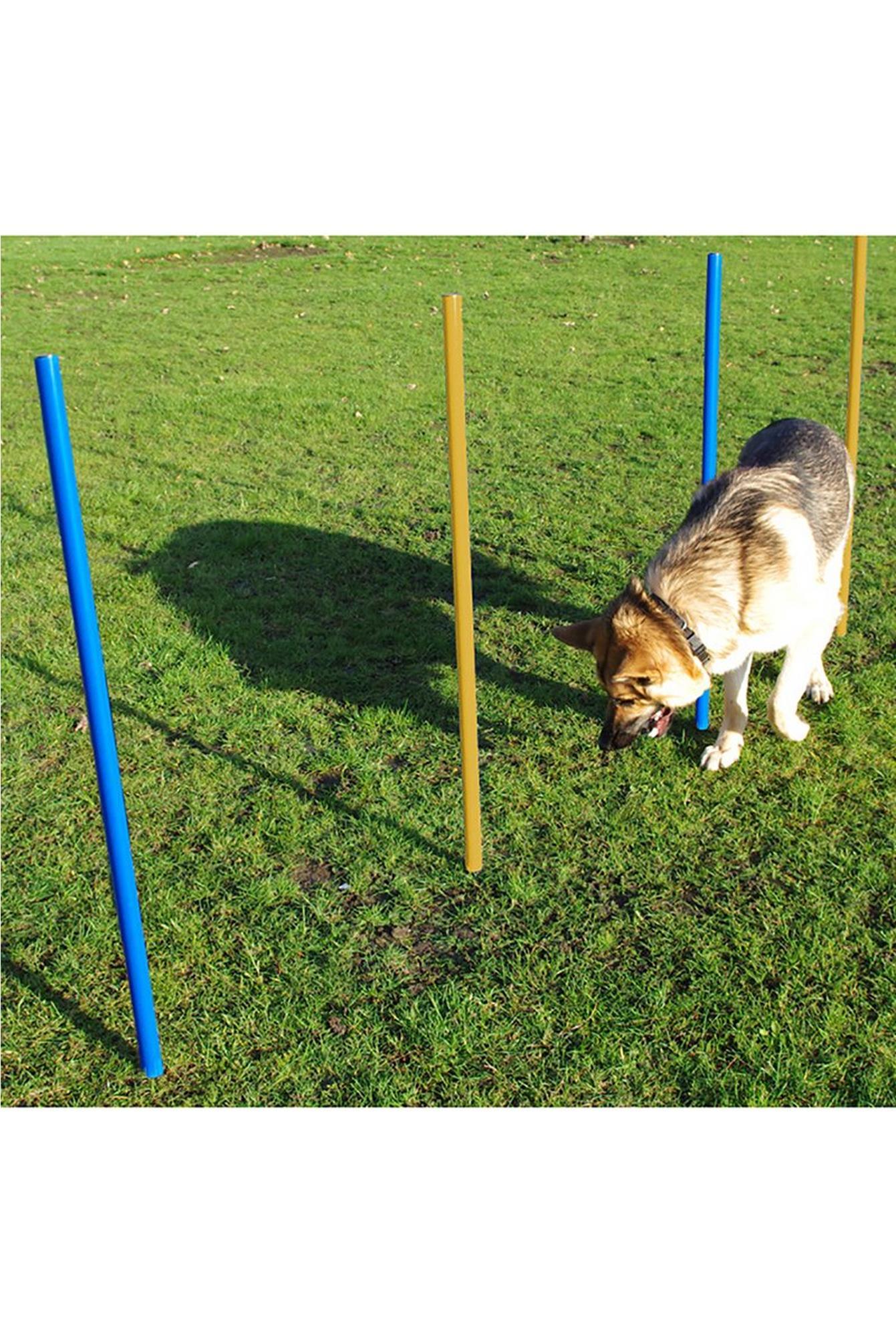 Dog going through slalom poles