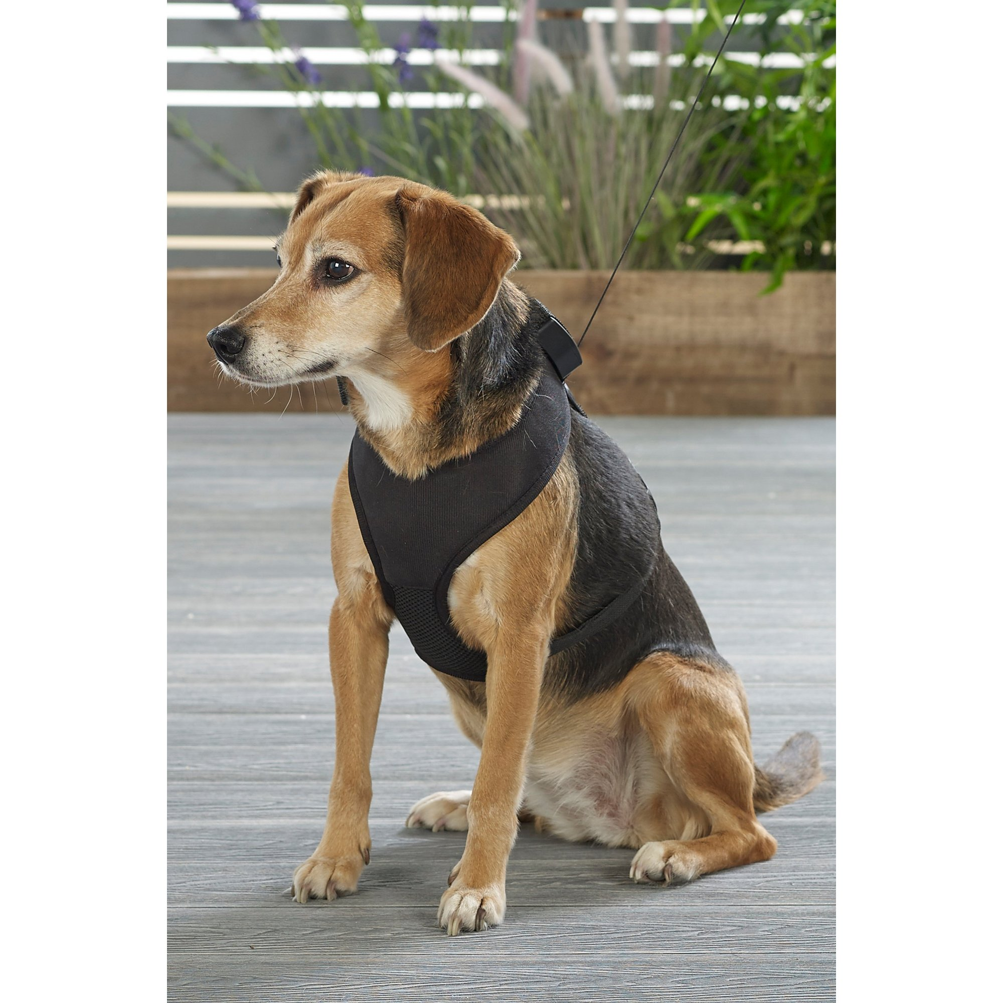 Image of Dog Harness with Built in Lead