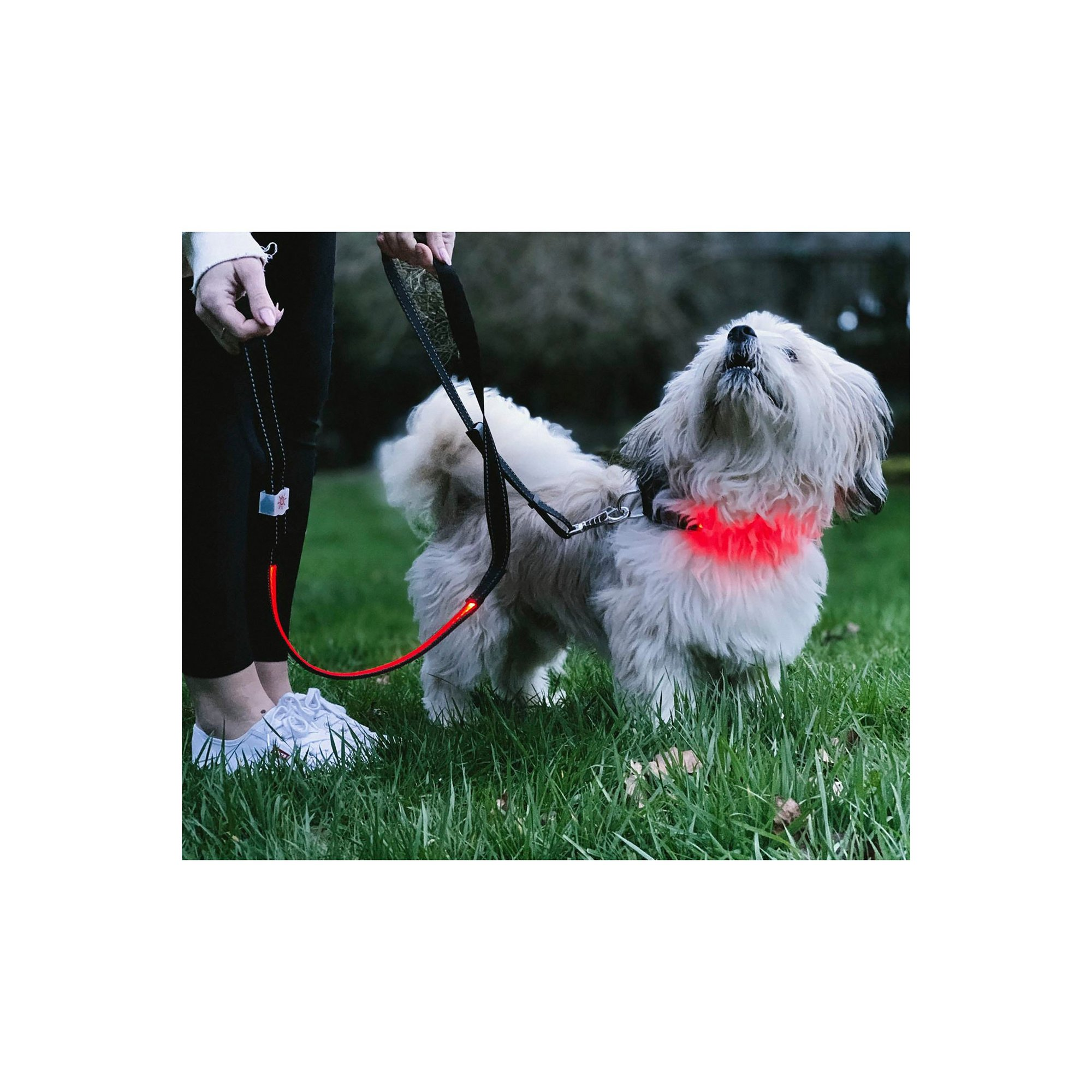Image of Lilly and Jake Small Red LED Collar