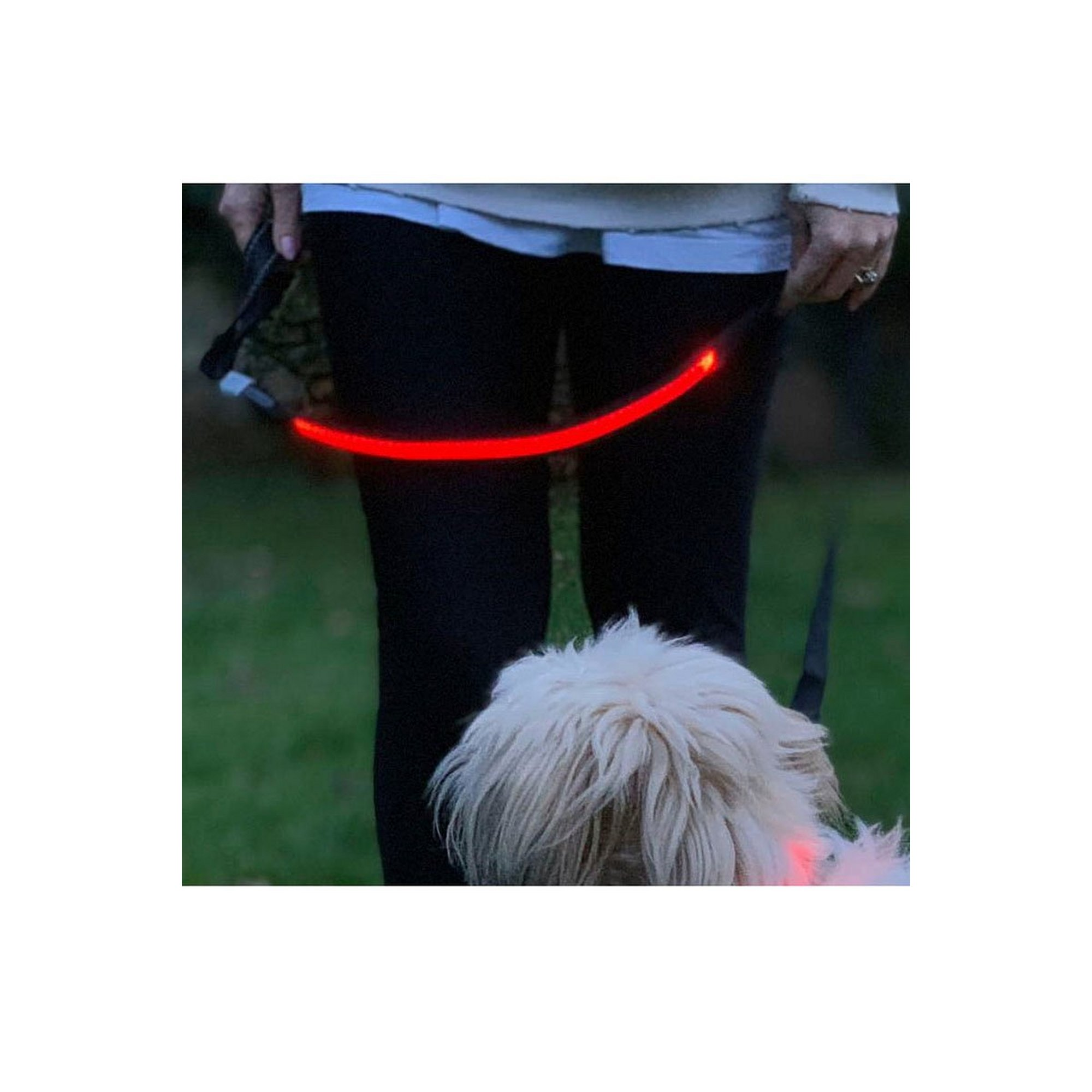 Image of Lilly and Jake LED Red Dog Lead