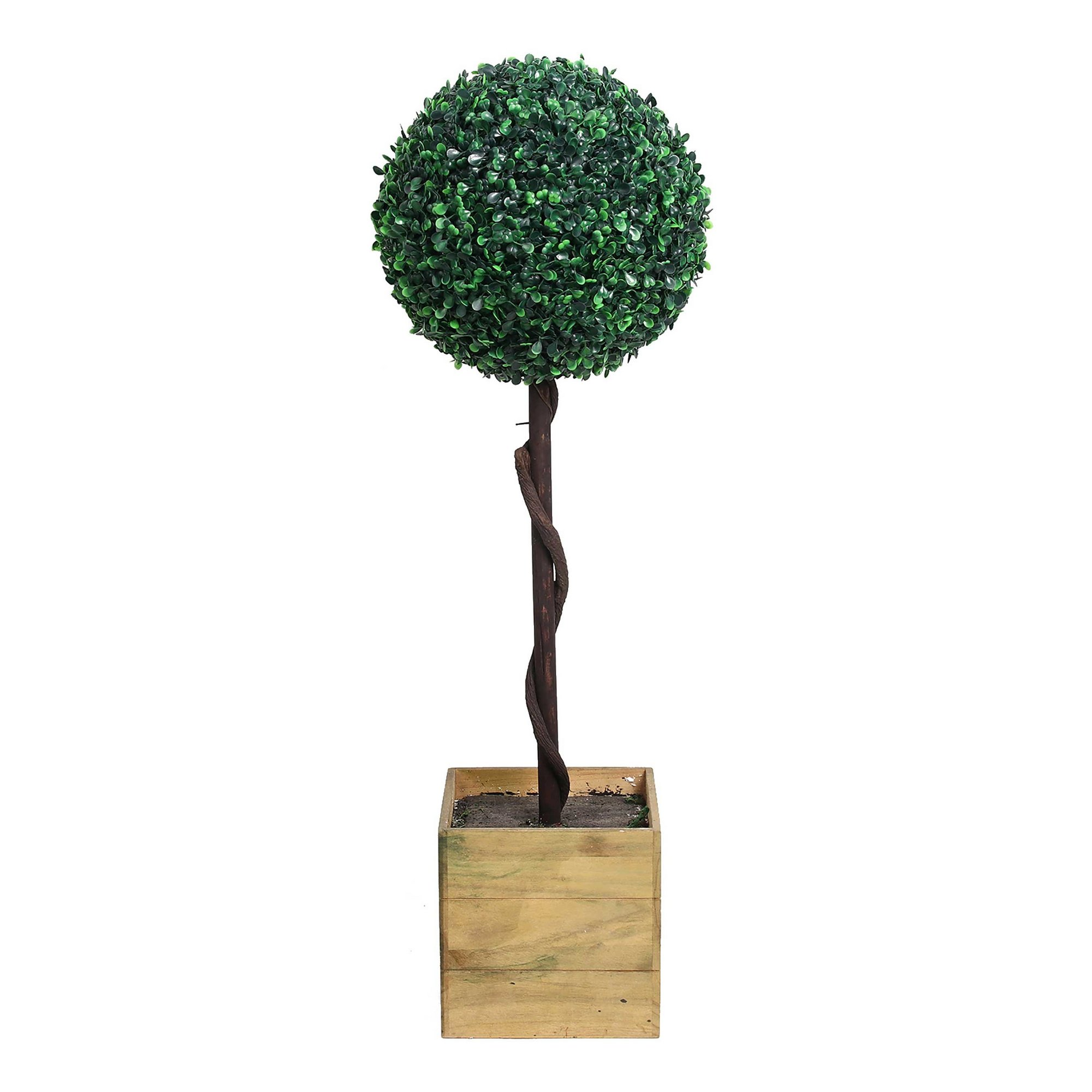 Image of Bay Ball Tall Tree in Pot