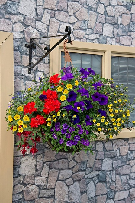 Image for Summer Mix Hanging Basket from studio