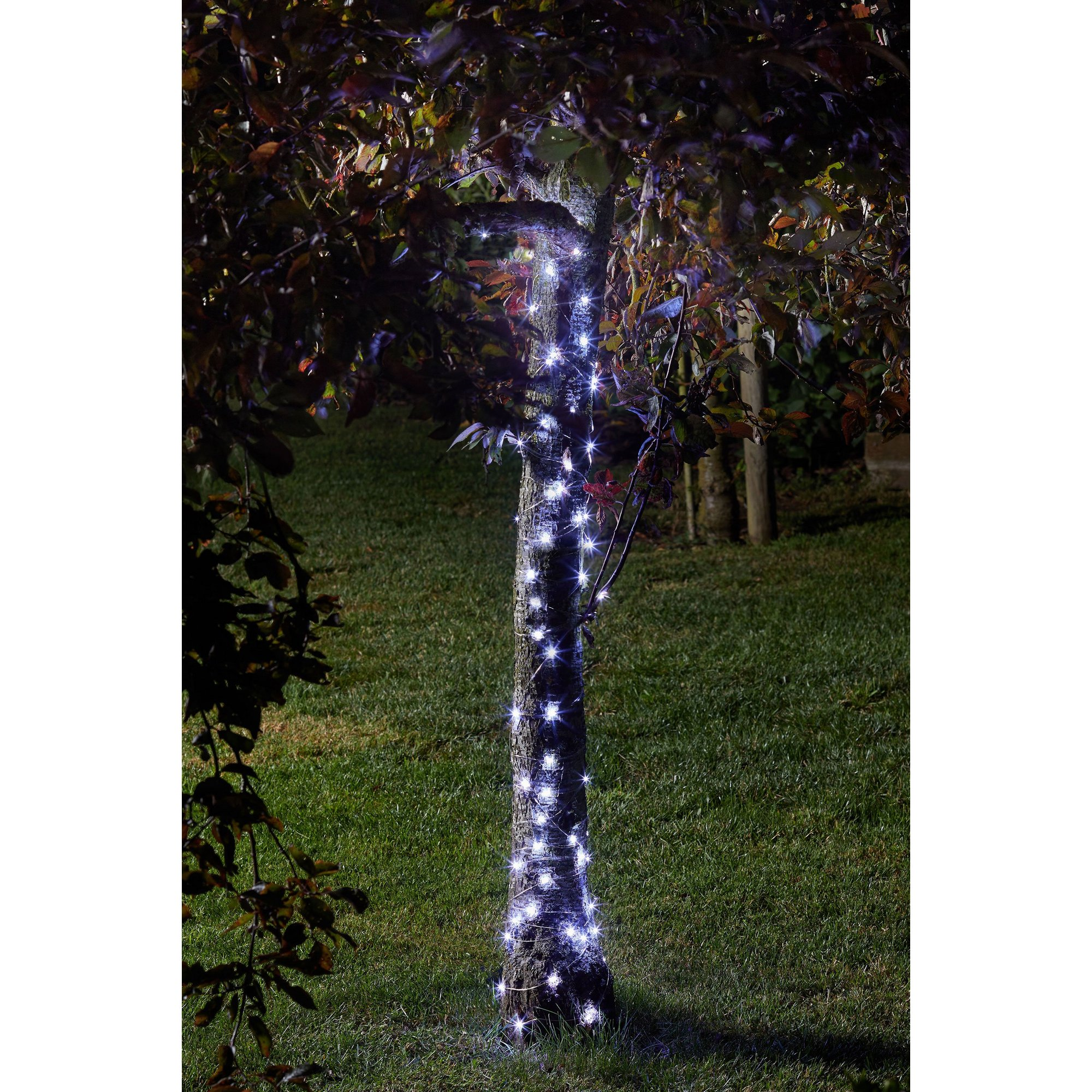 Image of 100 Cool White Firefly String Lights