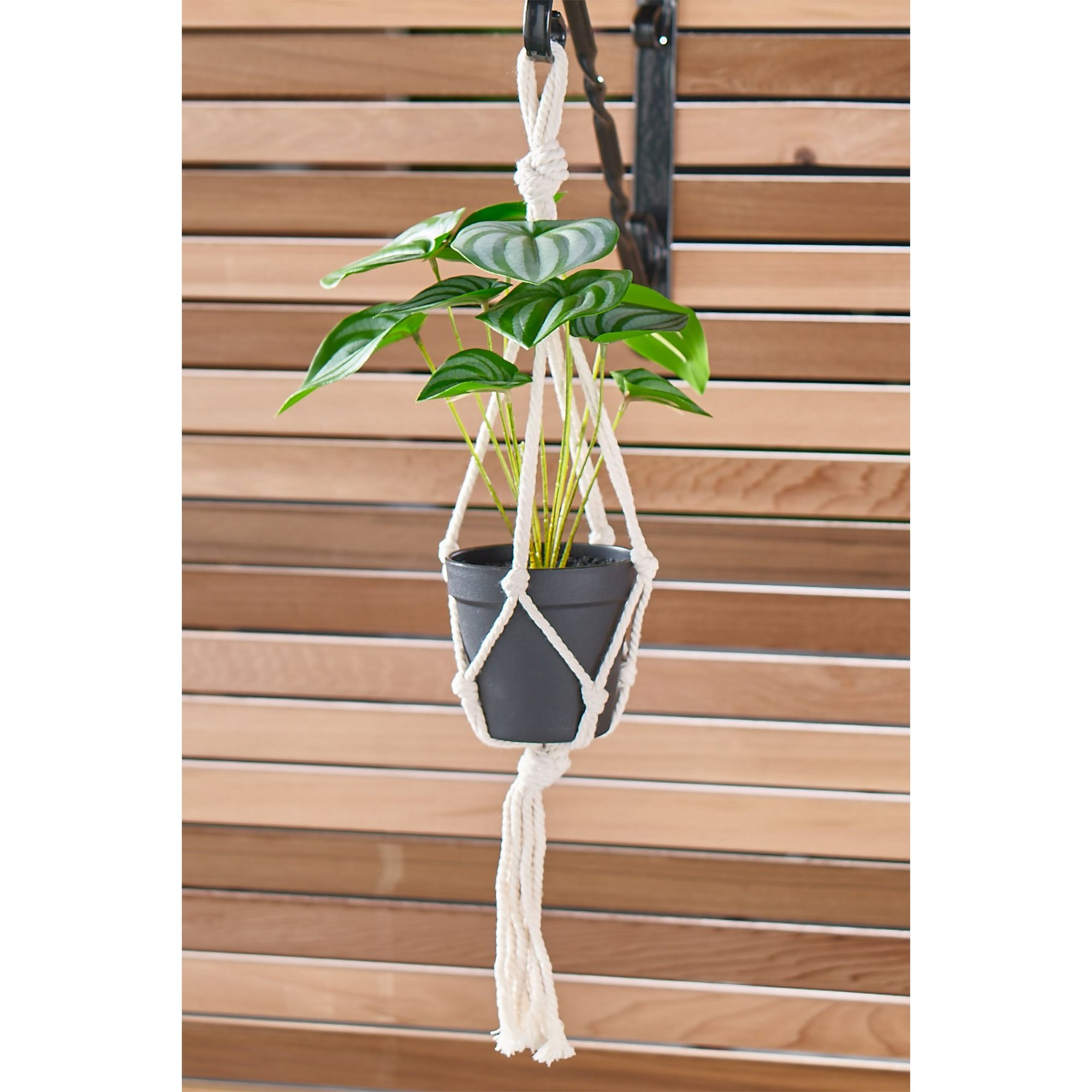 Image of Artificial Taro Leaves Hanging Pot Plant