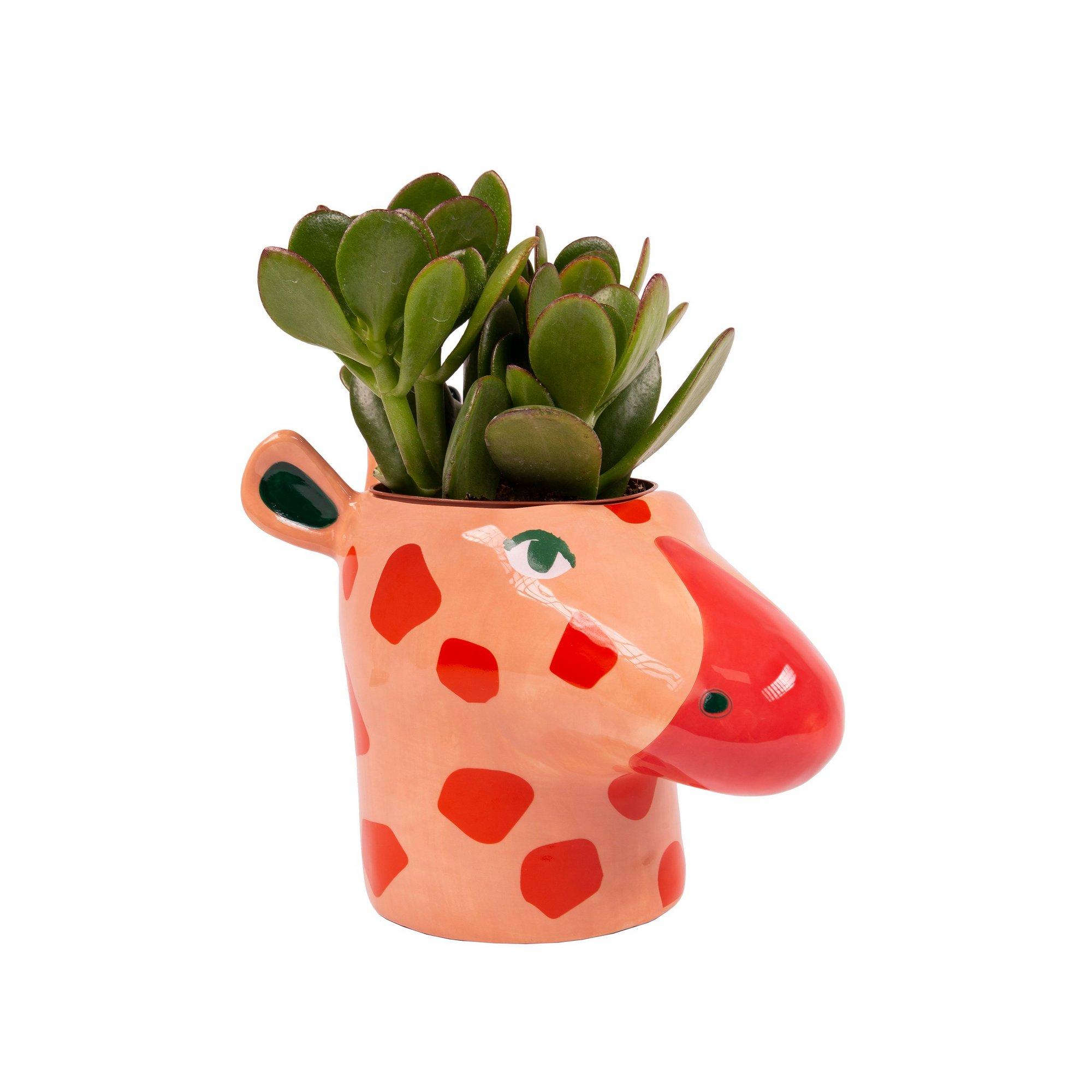 Image of Giraffe Plant Pot