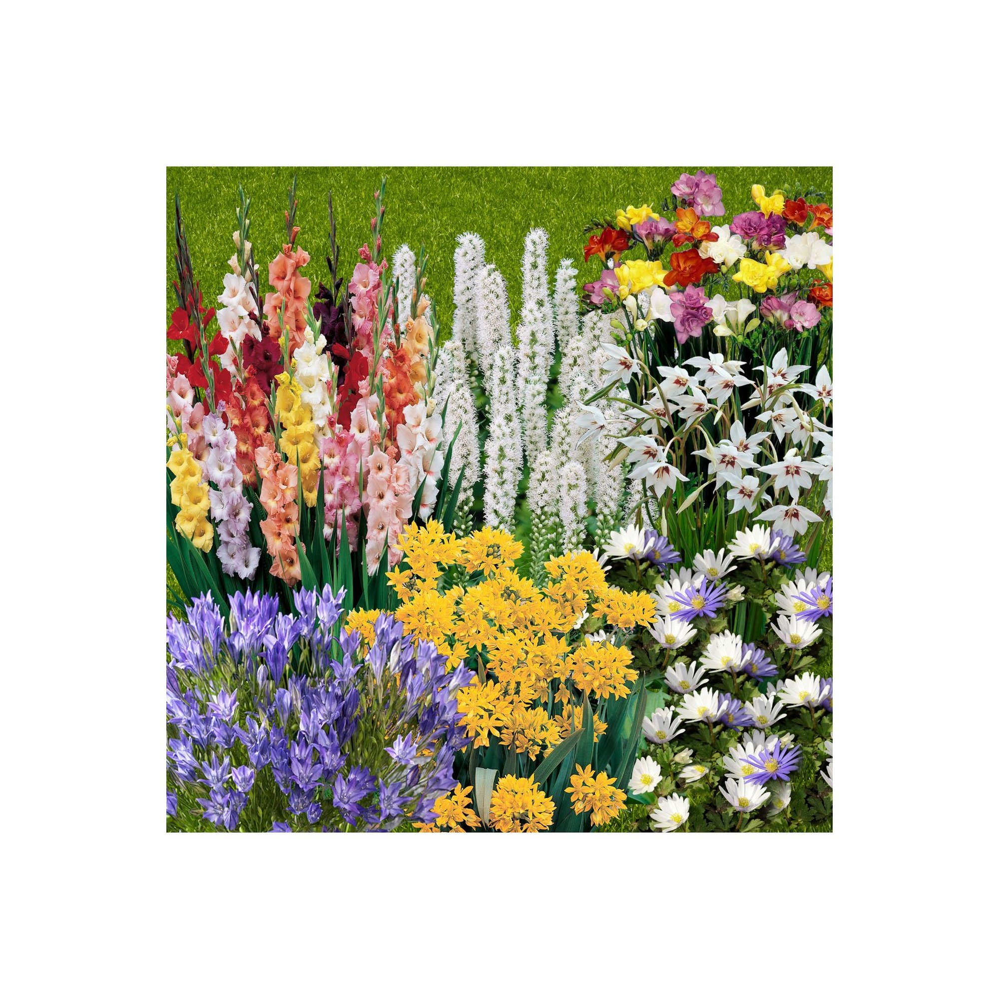 Image of 300 Summer Bulb Collection in 7 Varieties