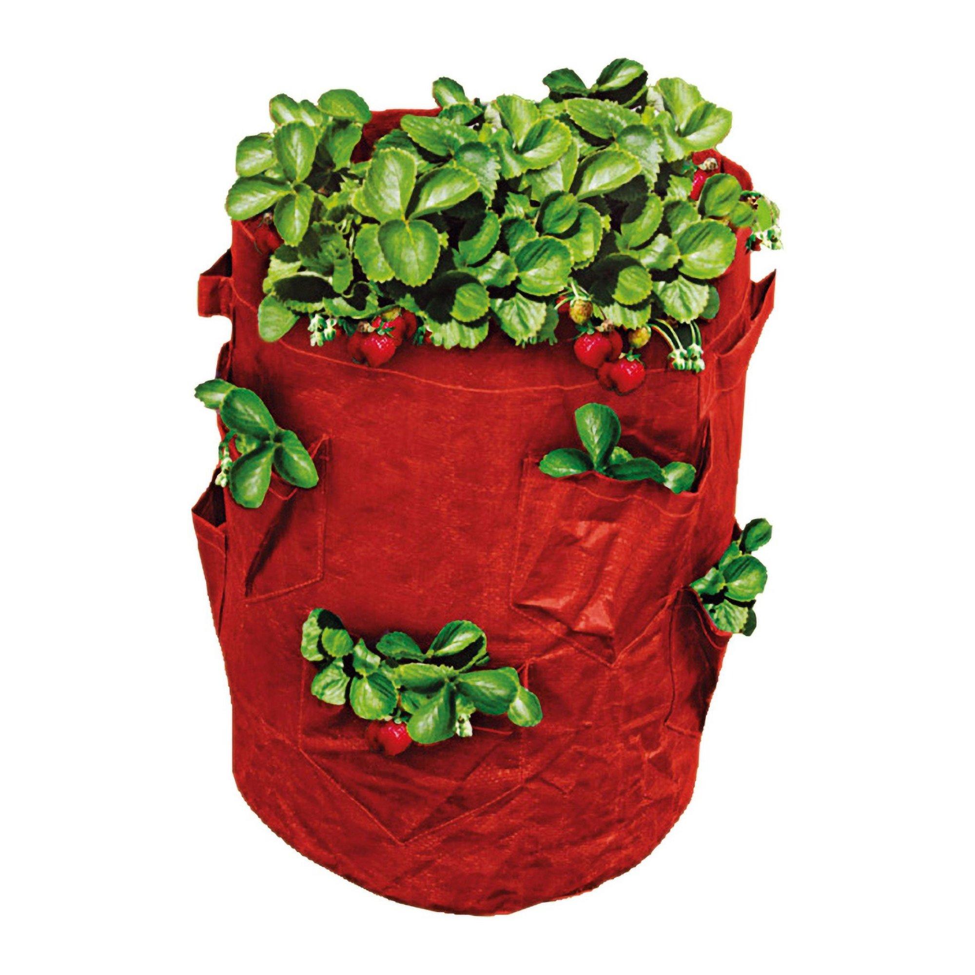 Image of 43 Litre Strawberry Grow Bag