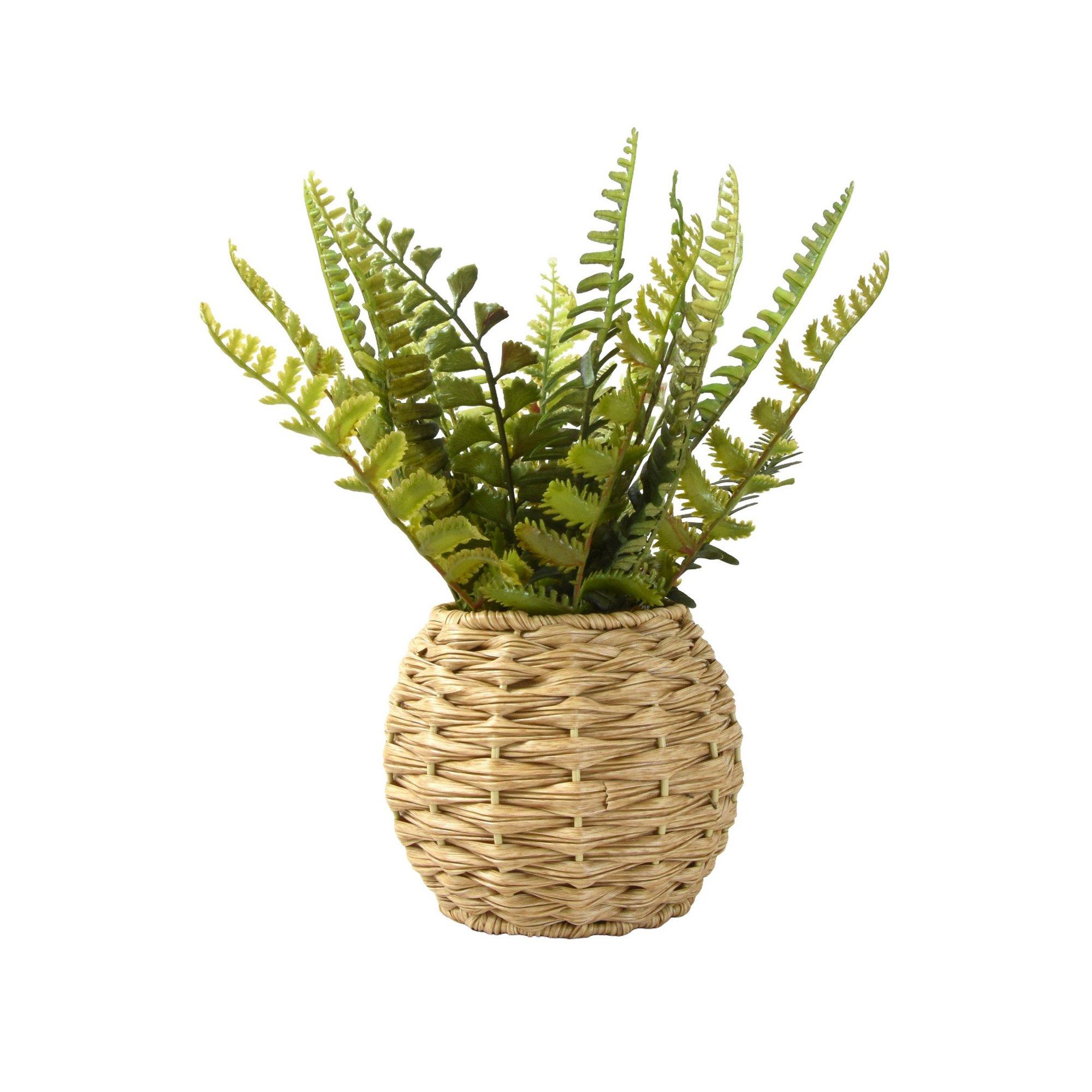 Image of Fern in Rattan Pot