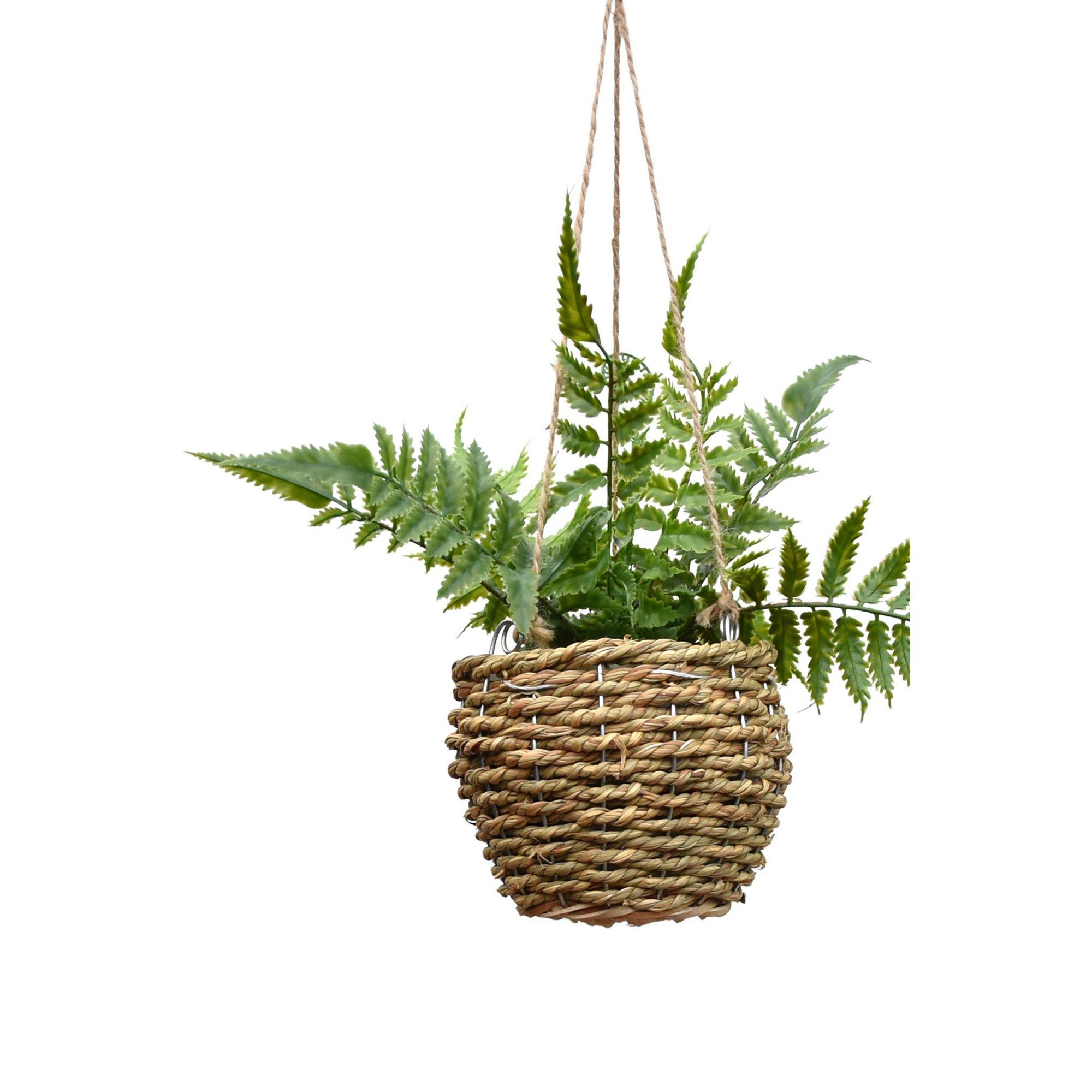 Image of Fern in Hanging Rattan Basket