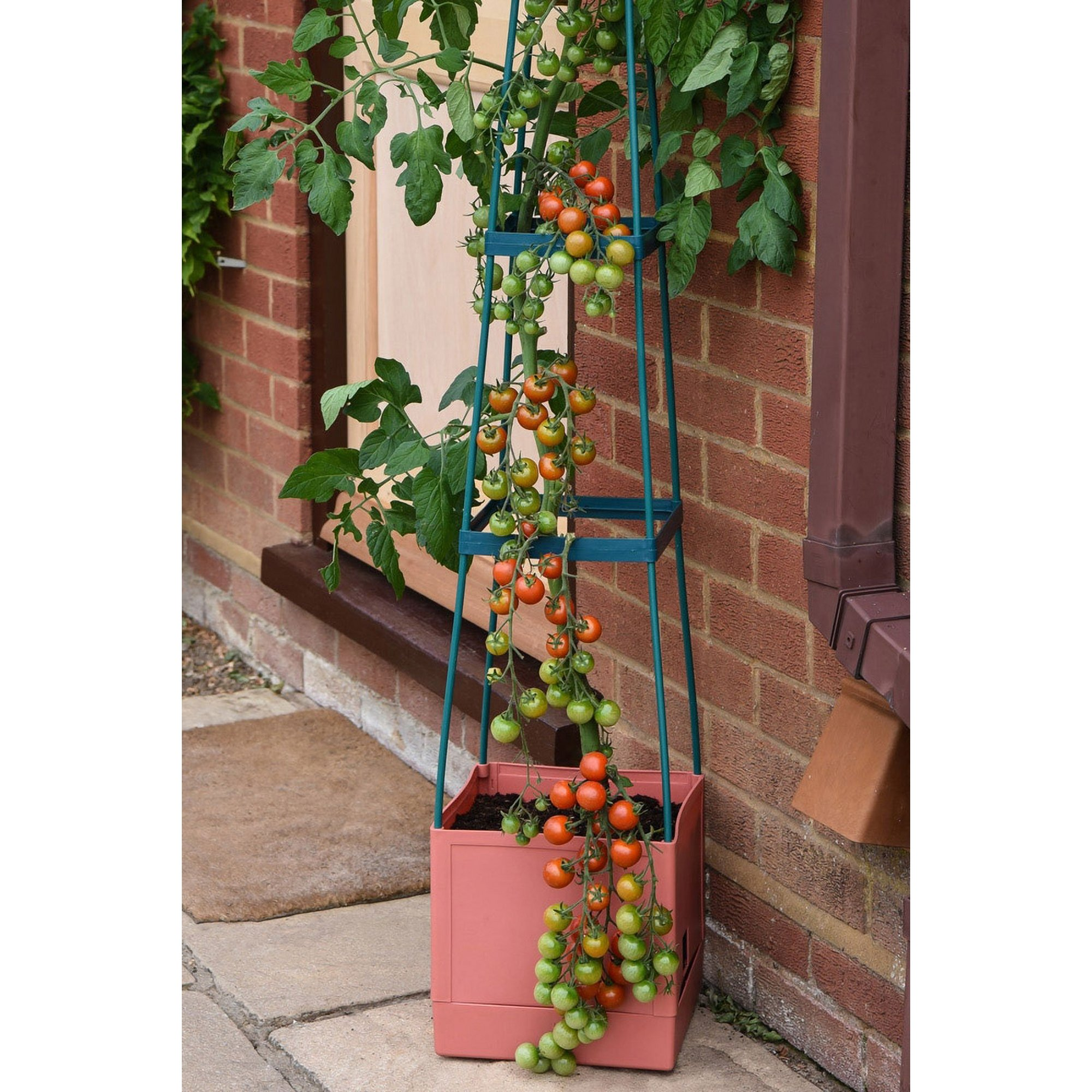 Image of 4 Tier Self Watering Tomato Tow