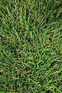 e93d81704af Fylde 30mm Artificial Grass - 2m Wide Longer Length