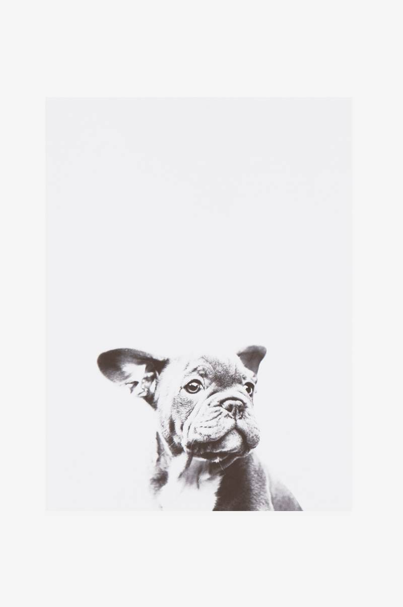 LITTLE DOG poster 30x40 cm