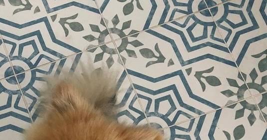 5 Pups That Are Loving Their Floors