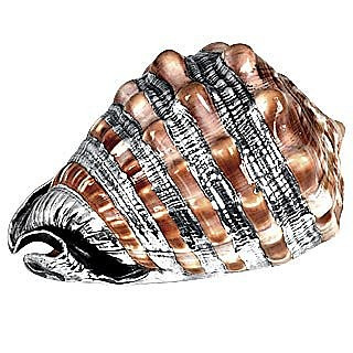 Cassis Rufa Natural Shell with Silver Ornaments - Morpier Firenze