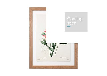 Sweet Peas Framed Picture in  on Furniture Village