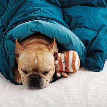 LaCrosse® Reversible Dog Comforter