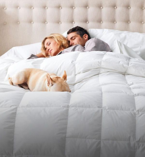 Shop Solid Comforters