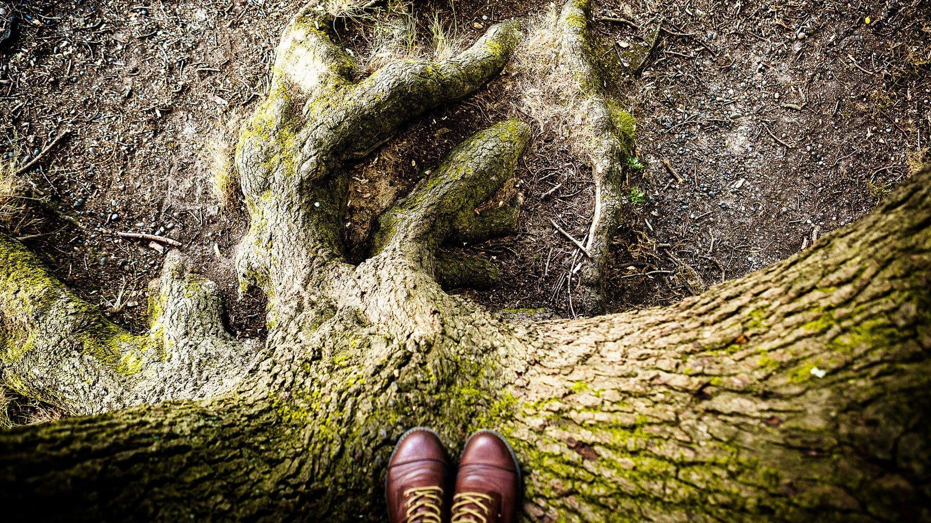 TreeWorkshop