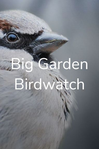 It's Back! Join the Big Garden Birdwatch