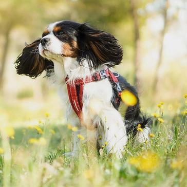 black Ezy-Dog Chest Plate Dog Harness (XL)