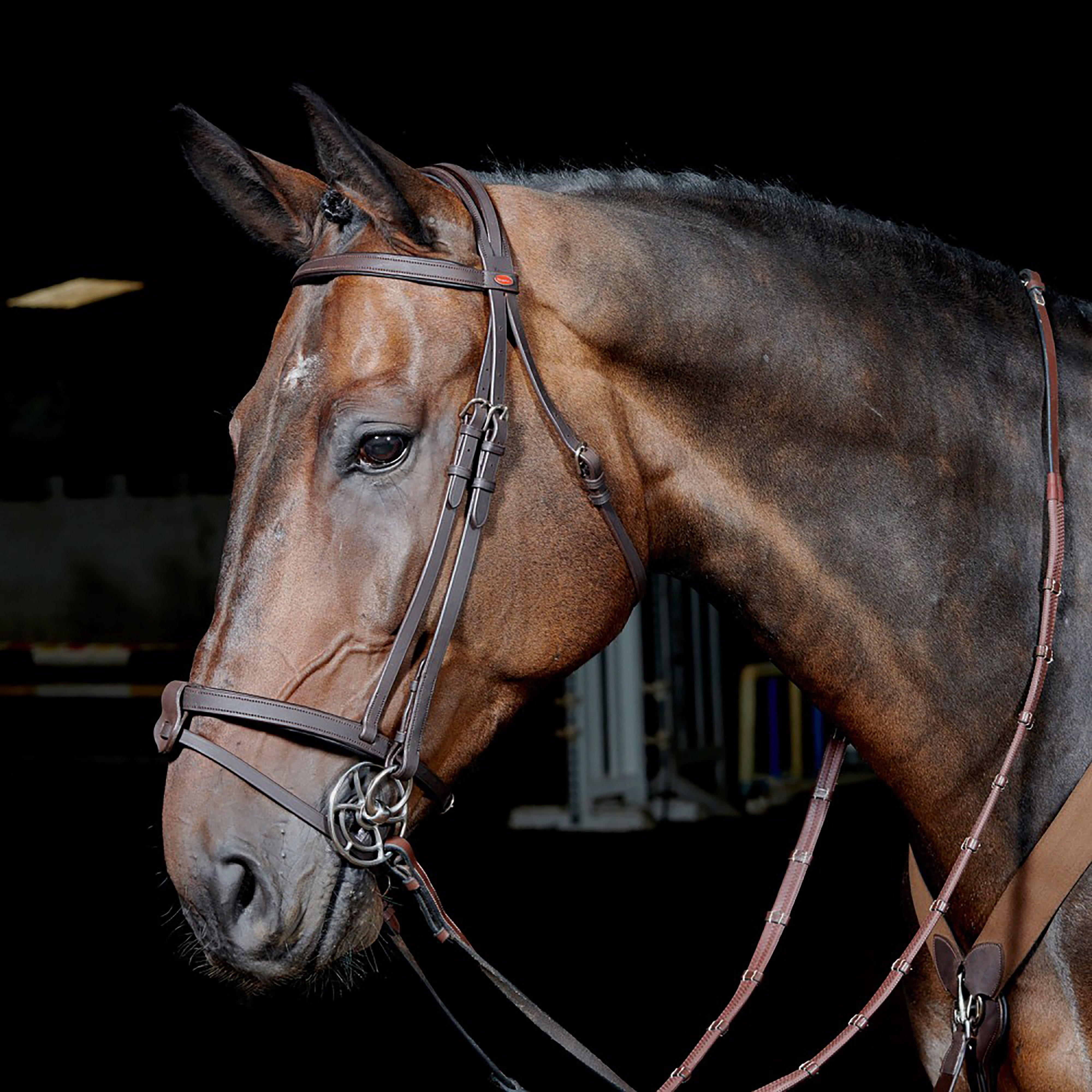 Image of Whitaker Ready-To-Ride Snaffle Flash Bridle - Brown/Brown, BROWN/BROWN
