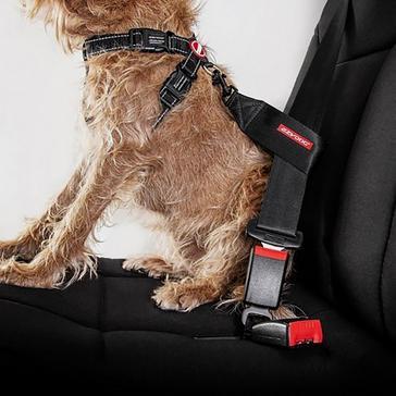 Black Ezy-Dog Dog Seat Belt Restraint