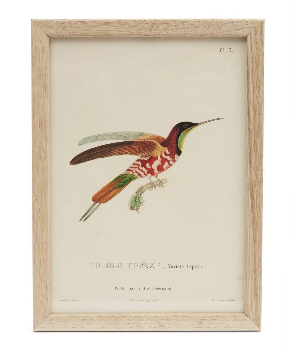 Colourful Hummingbird Framed Print