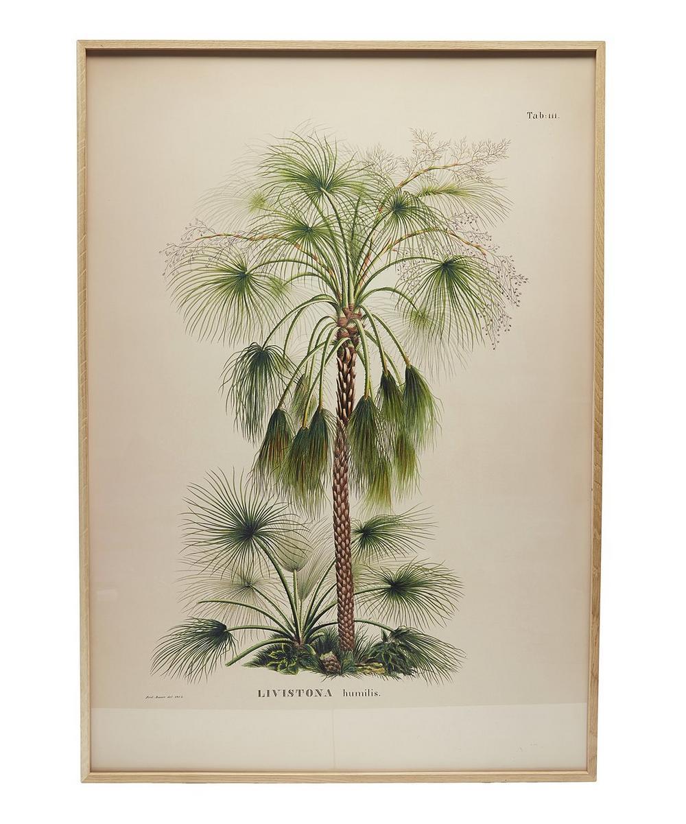 Livistona Framed Print