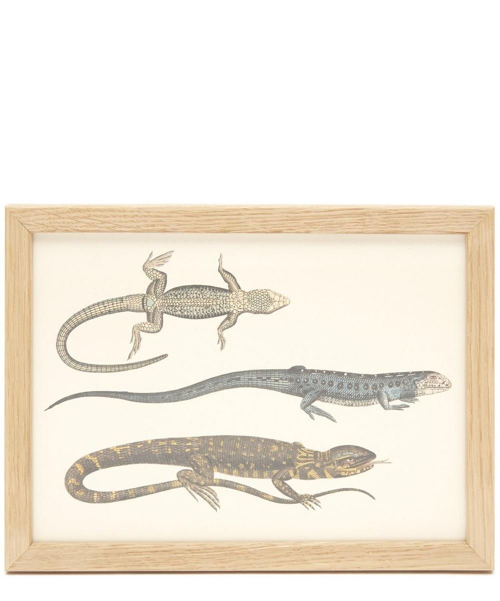 Lizards Framed Print