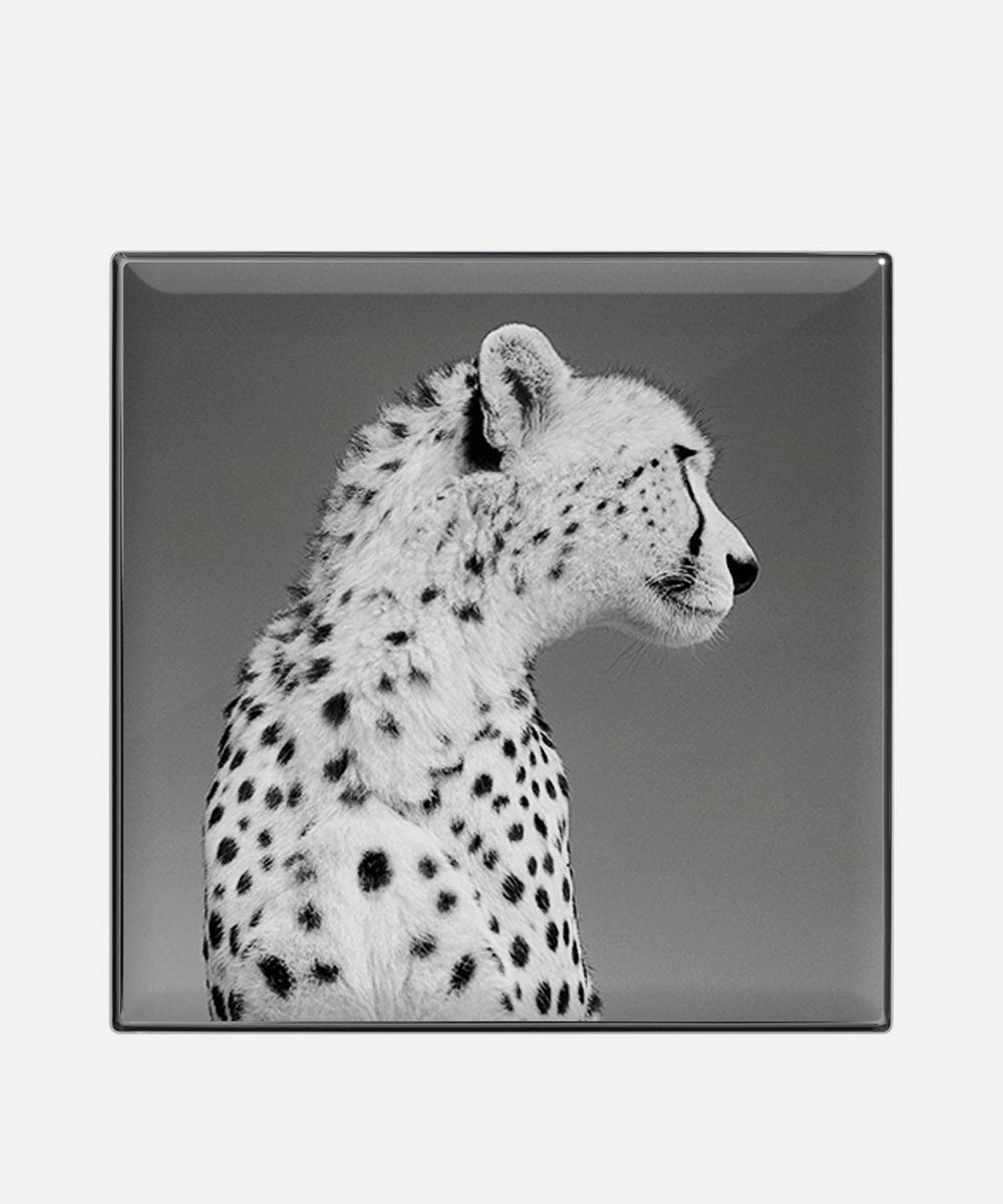 Cheetah Luminescent Eye Shade