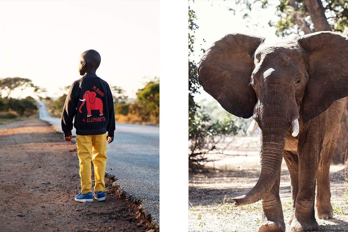 Mini Rodini: Saving the Elephants