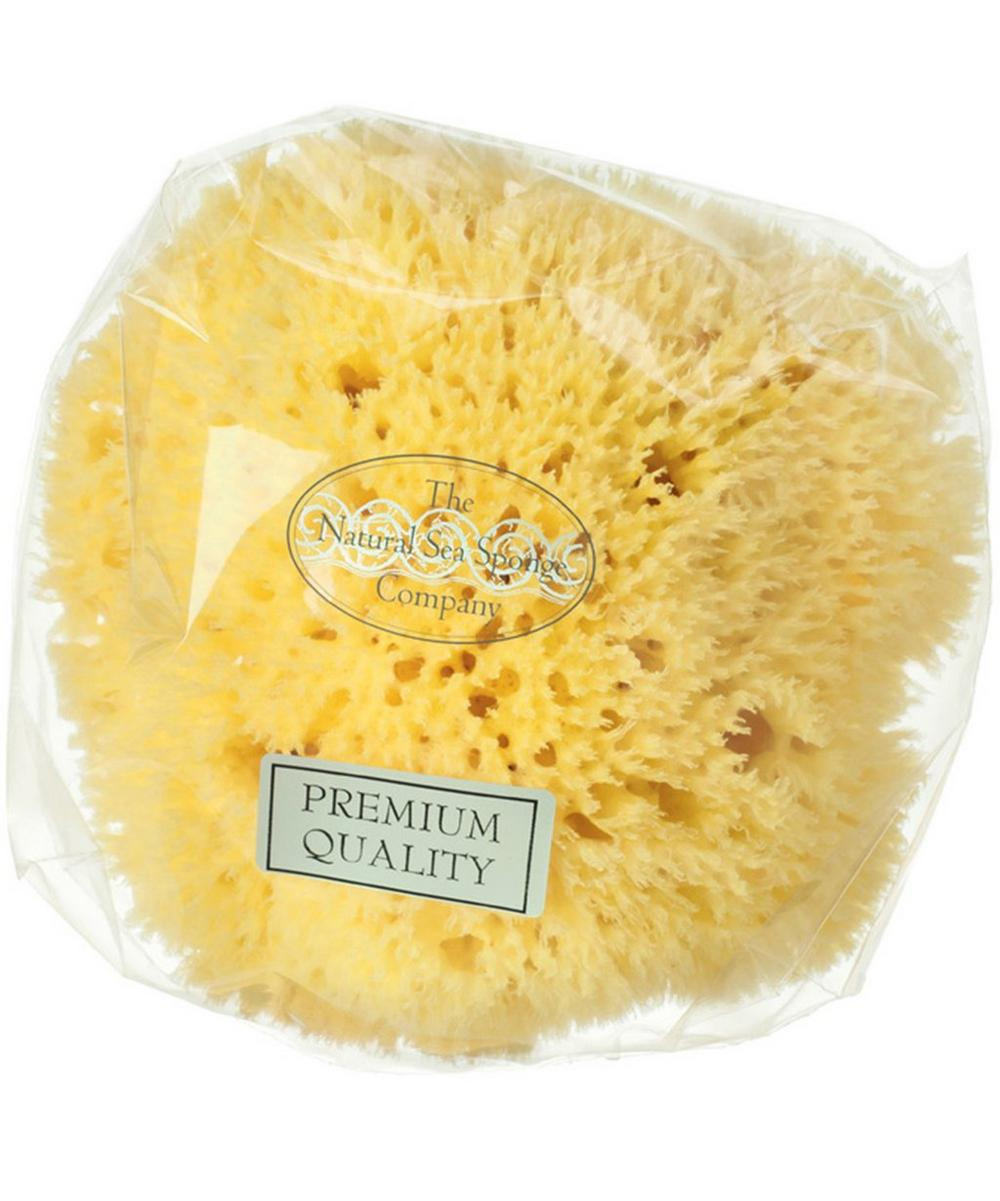 Large Honeycomb Natural Sea Sponge