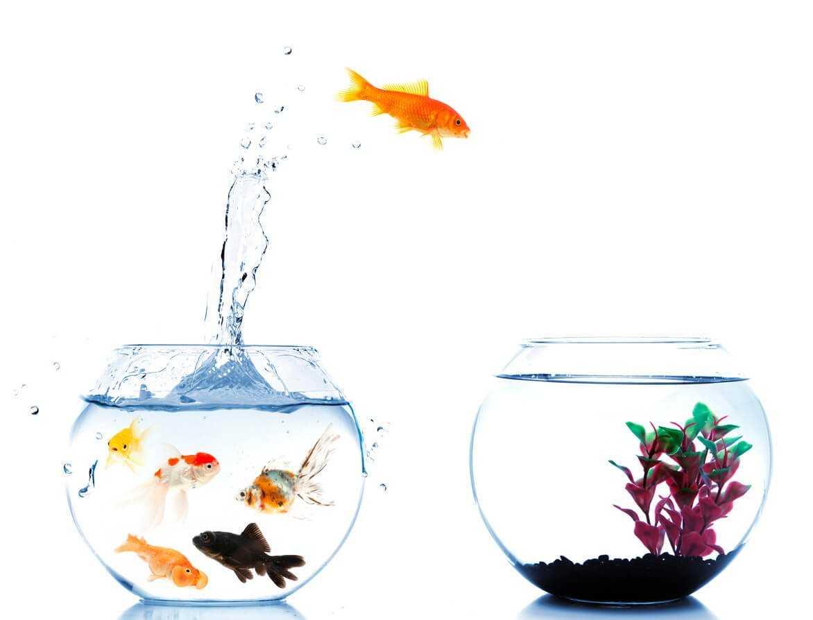 Fish Points Aquarium Care Pet Talk Pets At Home