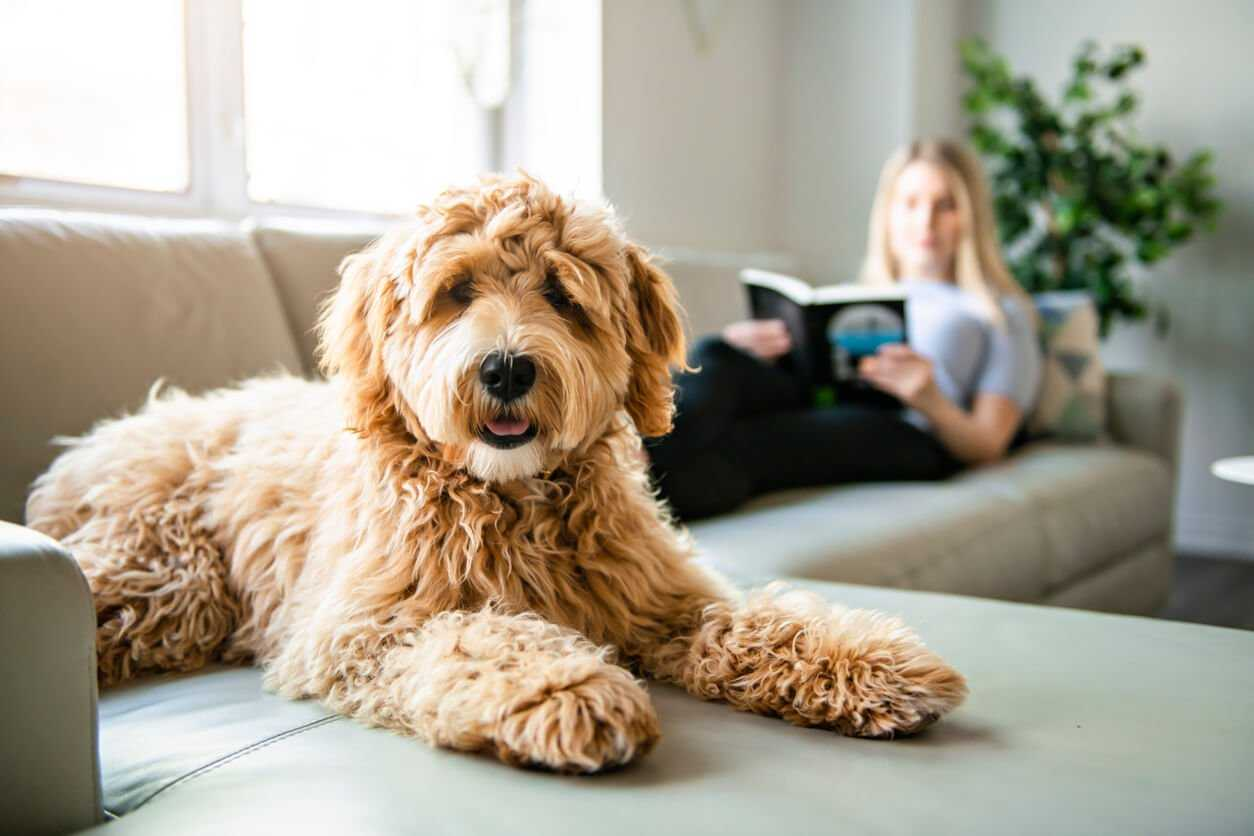 Faqs Pets And Covid 19