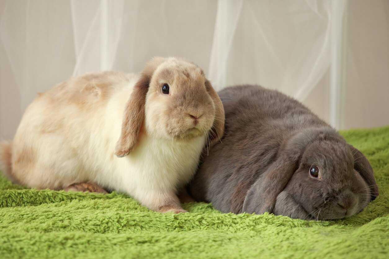 Indoor Or Outdoor Rabbit Pet Talk Pets At Home