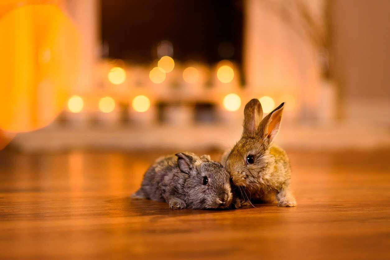 Pet Care How To Keep Happy House Rabbits Pets At Home