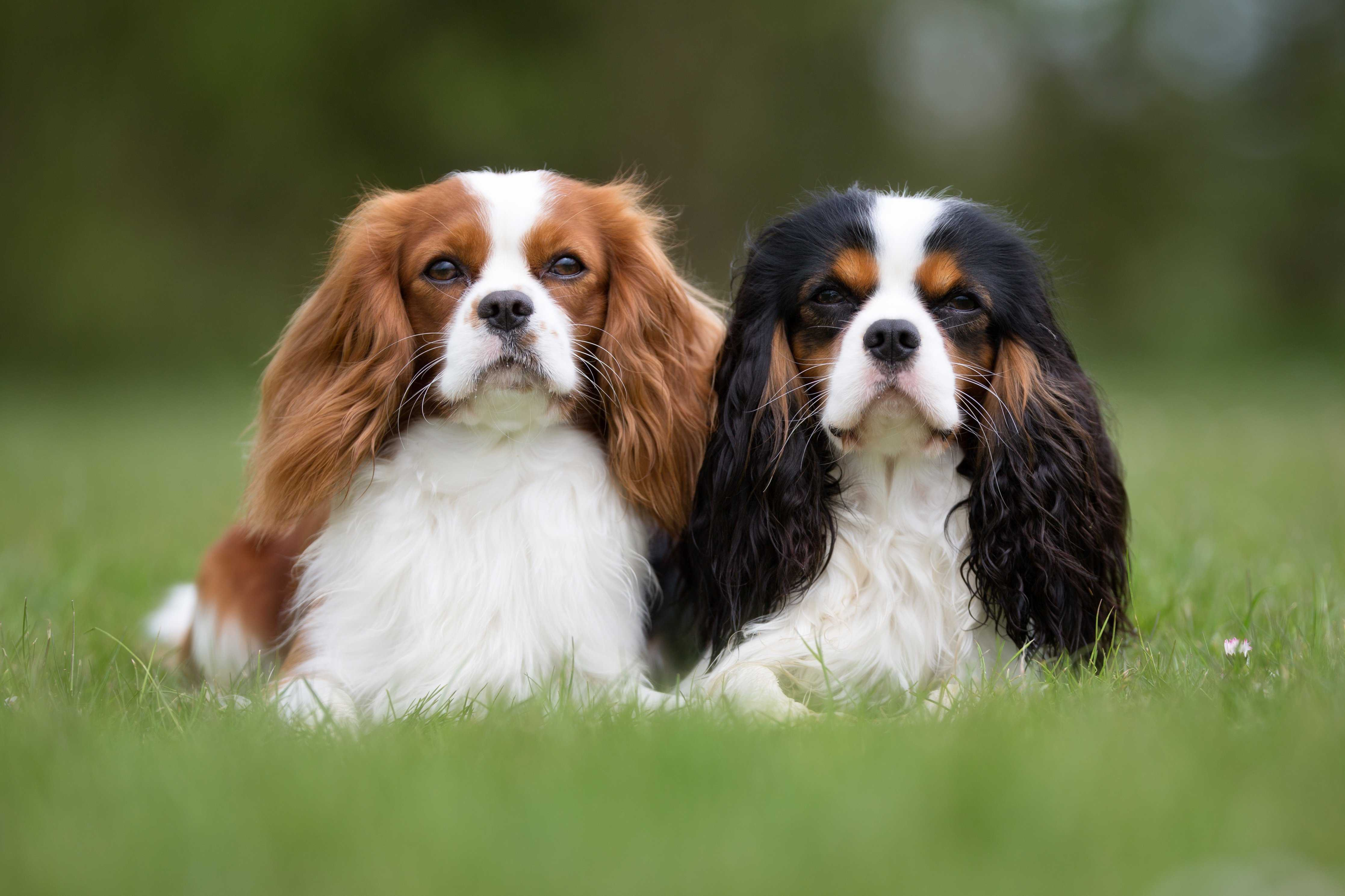 Top 10 Dogs For Flats Choosing A Pet Pet Talk