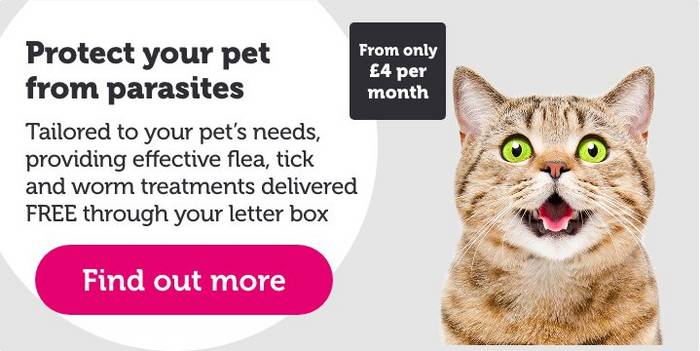 Cat Grooming And Clean Up Clean Groomed Pets At Home